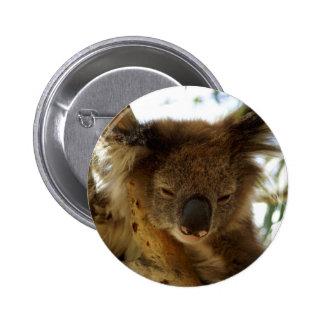 Wild koala sleeping on eucalyptus tree, Photo 6 Cm Round Badge