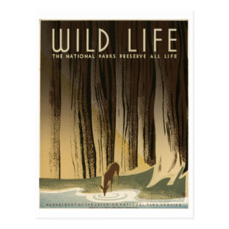Wild Life National Parks Preserve All Life1940 Postcard
