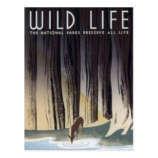 Wild Life Postcard