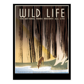 Wild Life Postcards