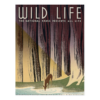 Wild Life - The National Parks preserve all Life. Postcard