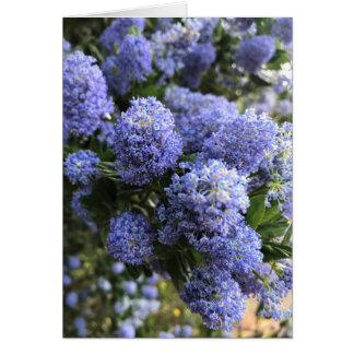 Wild Lilacs Card