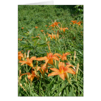 Wild Lilies of the Field Note Card