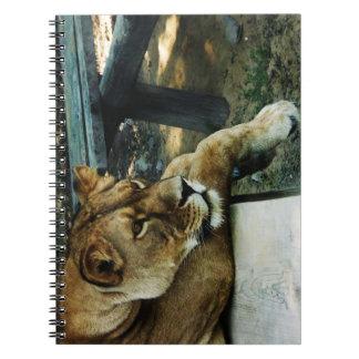 Wild Lion Animal Jungle Queen Spiral Notebook