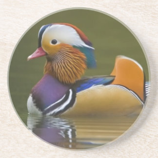 Wild Mandarin Duck Aix galericulata) on dark Drink Coasters