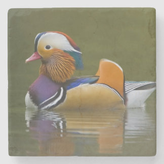 Wild Mandarin Duck Aix galericulata) on dark Stone Coaster