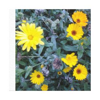 wild marigolds canvas print