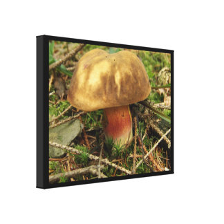 Wild Mushroom, Bolet des Sorcieres Canvas Print