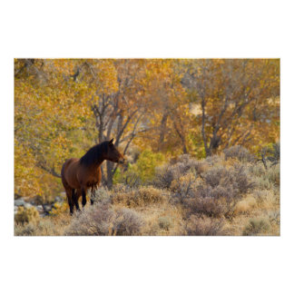 Wild Mustang Among Fall Colors Poster