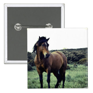 Wild Mustang Button