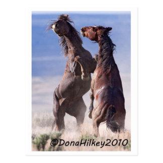 Wild Mustang Fight Postcard