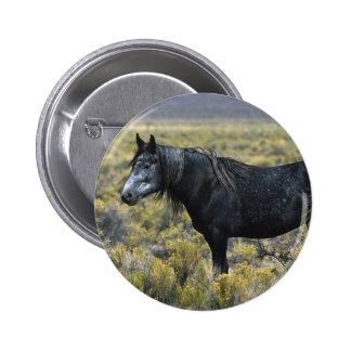 Wild Mustang Horse in the Desert Pinback Button