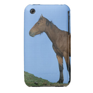 Wild Mustang Horse iPhone 3 Case-Mate Case