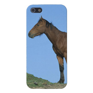 Wild Mustang Horse iPhone 5/5S Cover