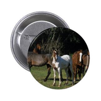 Wild Mustang Horses 1 Pins