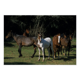 Wild Mustang Horses 1 Poster