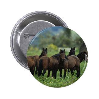 Wild Mustang Horses 3 6 Cm Round Badge