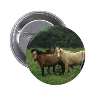 Wild Mustang Horses 4 6 Cm Round Badge