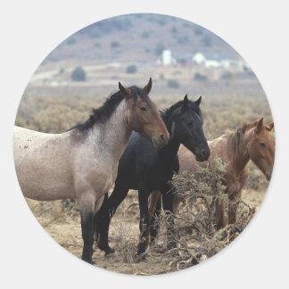Wild Mustang Horses 5 Round Sticker