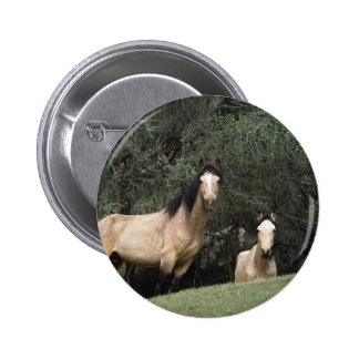 Wild Mustang Horses 6 Buttons