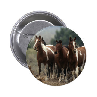 Wild Mustang Horses 7 Pinback Buttons