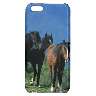 Wild Mustang Horses in the Mountains iPhone 5C Case