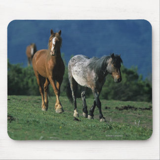Wild Mustang Horses Mouse Pad