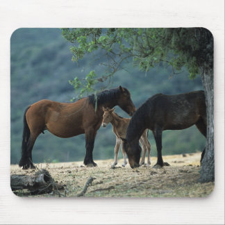 Wild Mustang Mare & Foal Mouse Pad