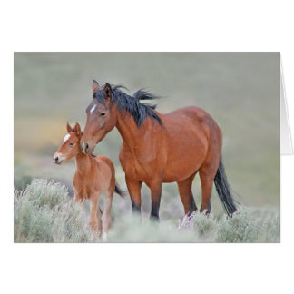 Wild Mustang Mare With Colt Card