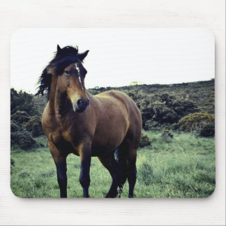 Wild Mustang Mouse Pad