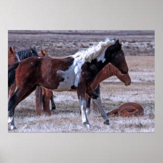 Wild Mustang Of Utah Poster