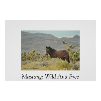 Wild Mustang Posters