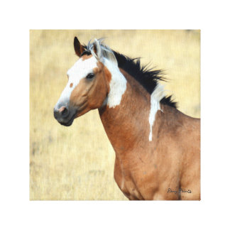 Wild Mustang Stretch Canvas Print