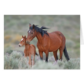 Wild Mustang with her Colt Cards