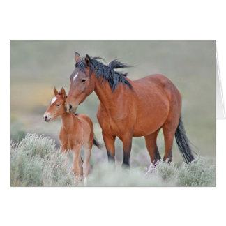 Wild Mustangs Card