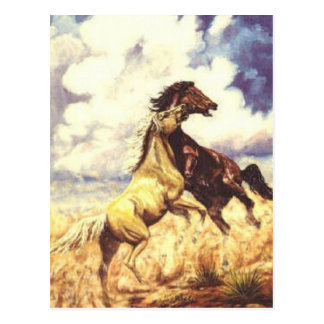 Wild Mustangs Postcard