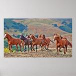 Wild Mustangs Print