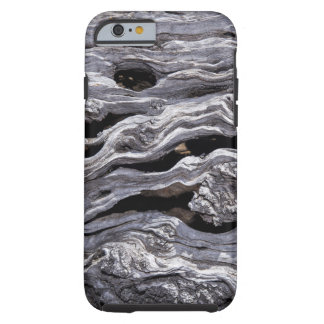 Wild Olive Tree | Great Karoo, South Africa Tough iPhone 6 Case