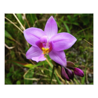 Wild Orchid Purple Tropical Flower Photo Print