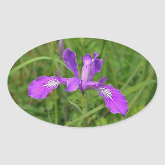 wild Oregon Iris Oval Sticker