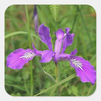 wild Oregon Iris Square Sticker