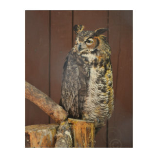 Wild Owl Wood Art, Natural photo Wood Wall Art