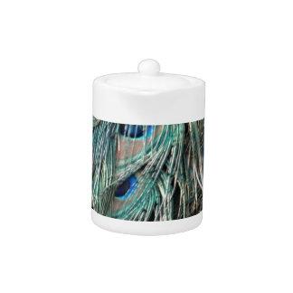 Wild Peafowl Feather Eyes