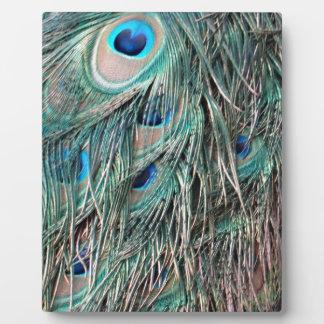 Wild Peafowl Feather Eyes Display Plaque