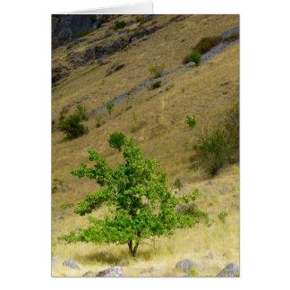 Wild Pear Tree Greeting Card