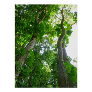 Wild Philodendron Vines Poster