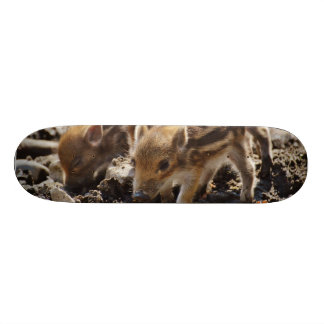 Wild piglets skateboards