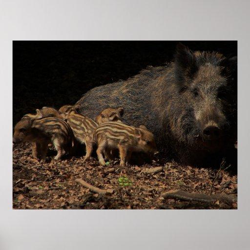 Wild pigs print