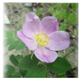 """Wild Pink Rose Large (6"""" X 6"""") Ceramic Photo Tile"""