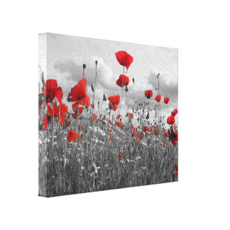 Wild Poppies in Black, White and Red Stretched Canvas Prints